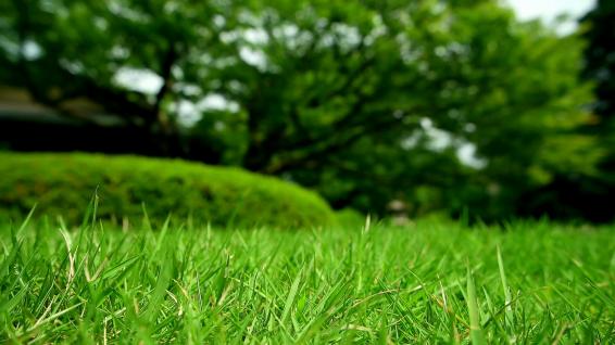 natural_grass.png